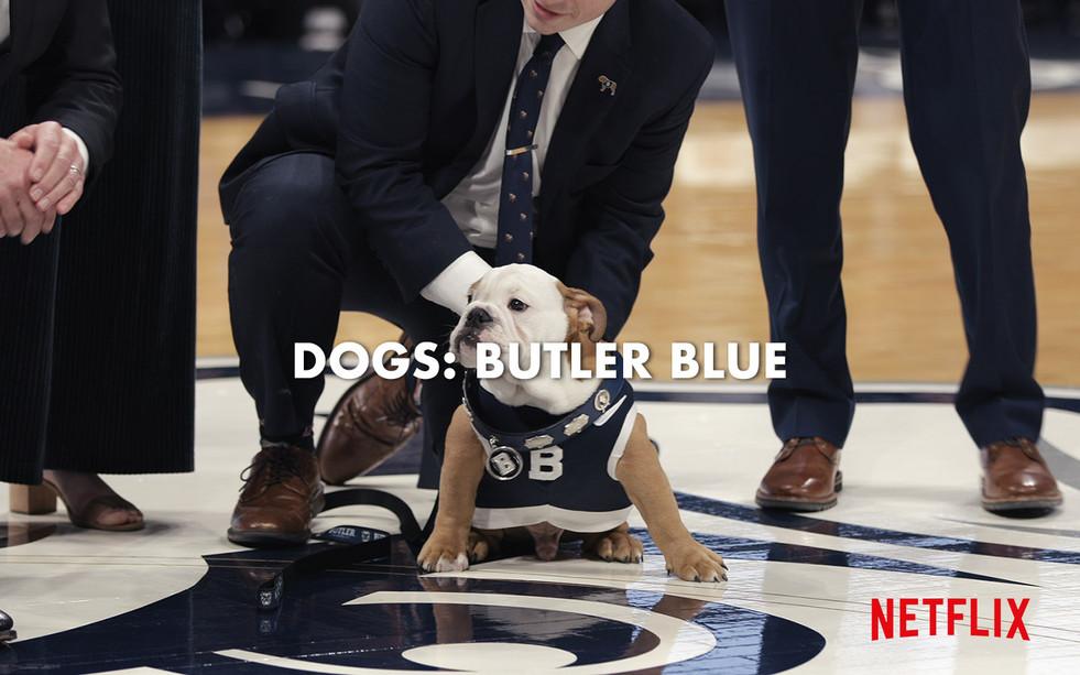 DOGS: BUTLER BLUE