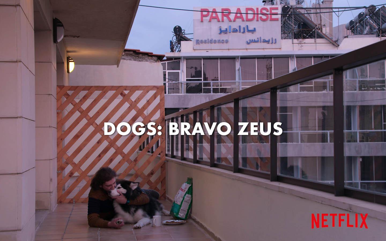 DOGS: BRAVO ZEUS