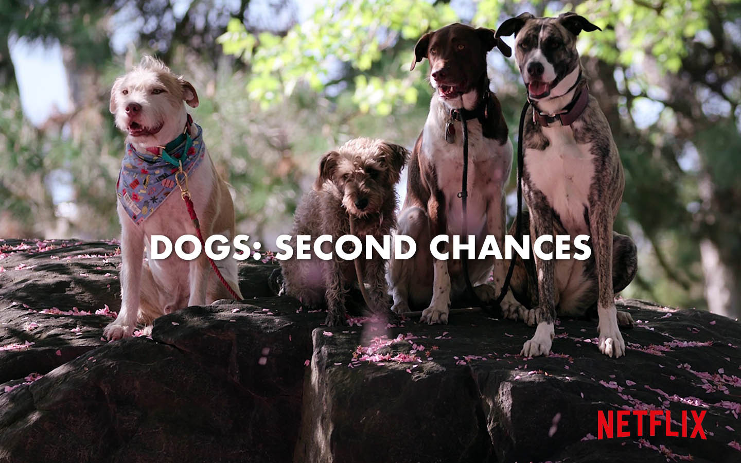 DOGS: SECOND CHANCES