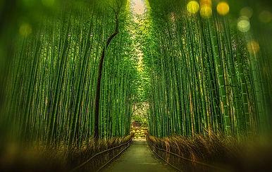 kyoto-1860521_640.jpg