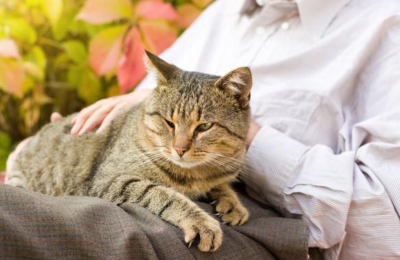 cat in lap.jpg