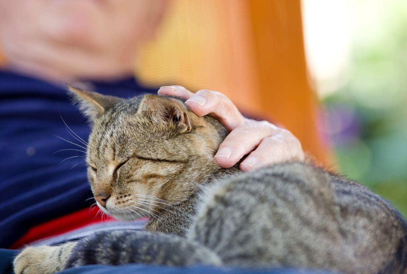 man cuddling cat.jpg