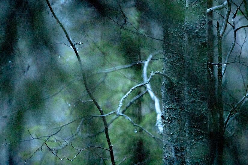 Metsän kätkemä