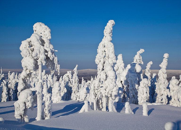 Tykky Ounasvaaralla | Snow load in Ounasvaara