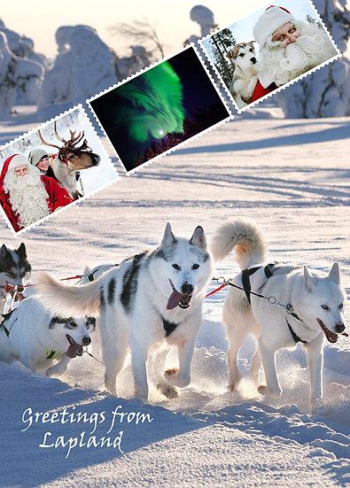 Huskyt kieli pitkällä | Huskies with tongues out