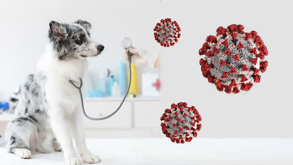Corona-Virus-And-Your-Pet-1024x576.jpg