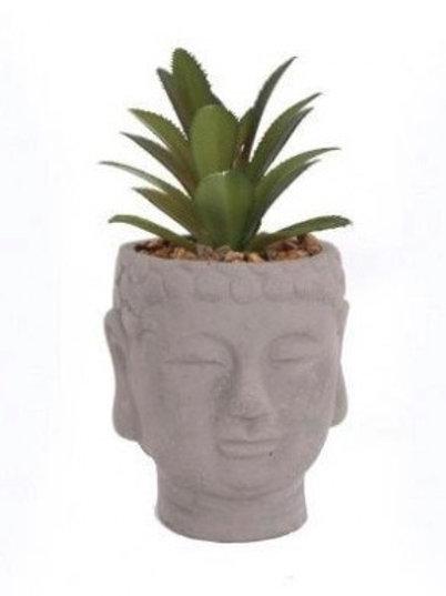 Buddha Head Succulent