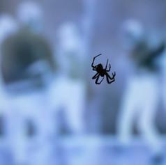 SpiderDecendsDance_B033.jpg