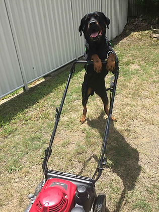 best lawn mowing brisbane.jpg
