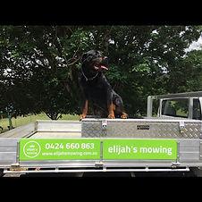professional lawn maintenance qld