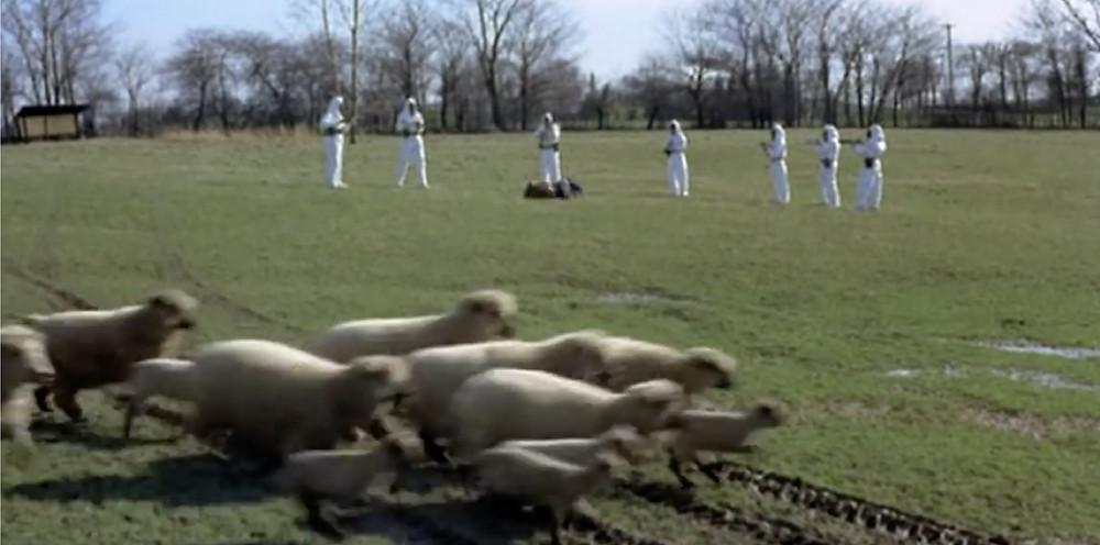 Fig.55: Herd of sheep moves across the frame.  ©Youtube