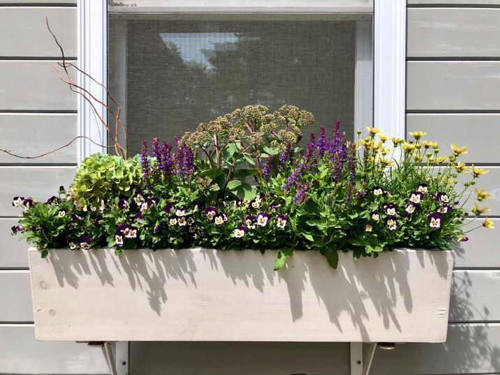 Hydrangea, Salvia, Sedum, Tickseed, and Violets