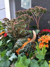 Pumpkin, Ivy, and Sedum
