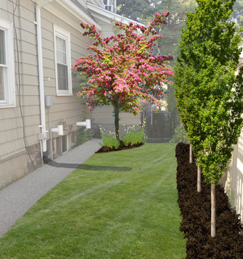 Side Yard Privacy Planting