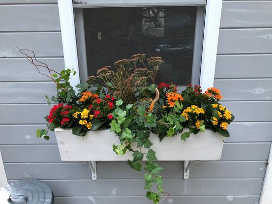 Kalanchoe, Sedum, Pumpkin, and Ivy