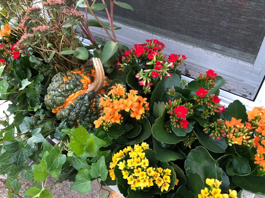 Kalanchoe, Pumpkin, and Ivy