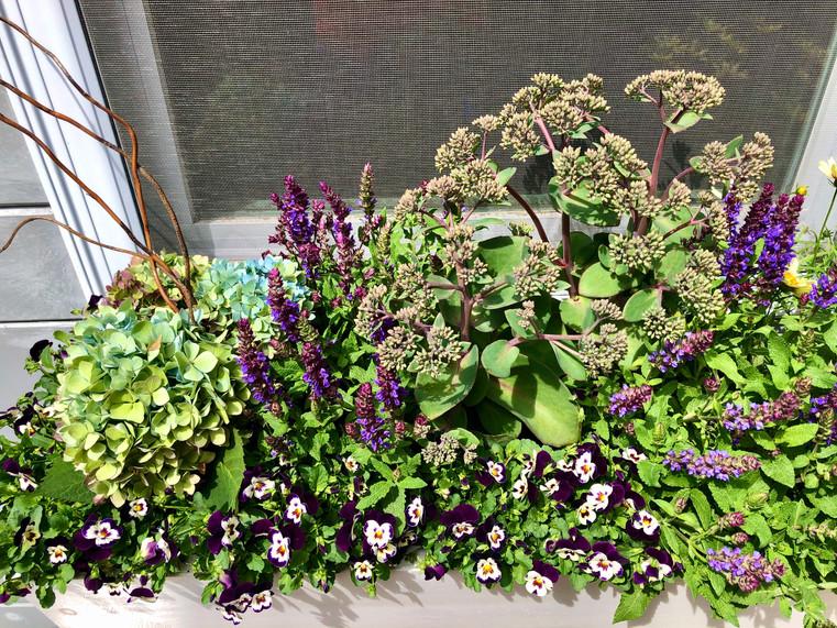 Hydrangea, Salvia, Sedum, and Violets