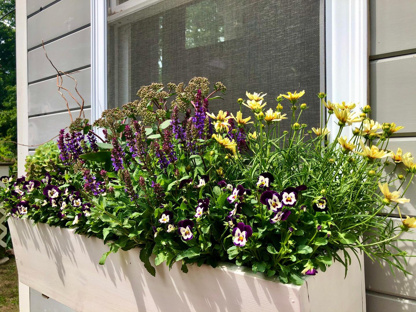 Salvia, Tickseed, and Violets