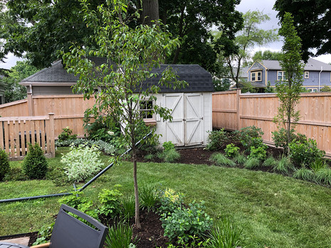 Crabapple and Shed planting bed
