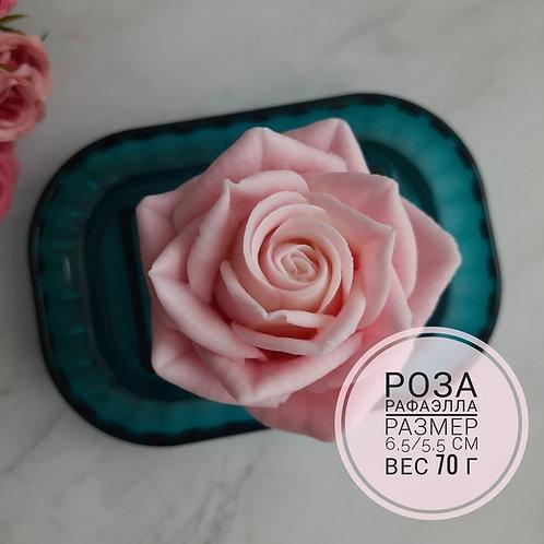 Роза Рафаэлла