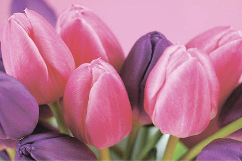 Тюльпаны фон