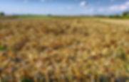 déchets_agricoles.jpg