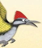 Common-Goldenbacked-Woodpecker_edited.jp