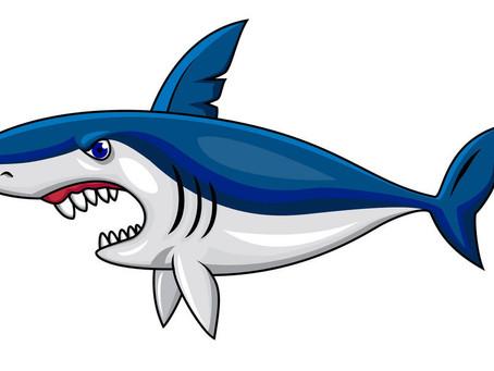 North Atlantic White Shark Makes Her Way to the Gulf Coast!