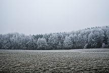 Snedækkede træer