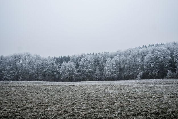 Schnee bedeckte Bäume