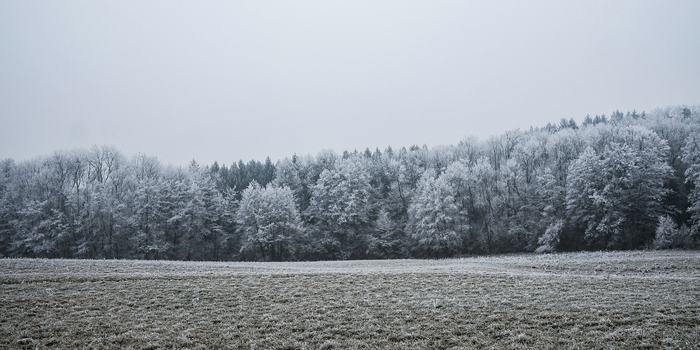 Mid-Winter Shamanic Journey Walk