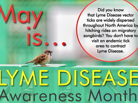 FREE May Massage Upgrade in honor of Lyme Disease Awareness Month!