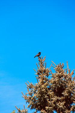 Raven Magic