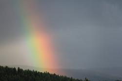 Rainbow in June