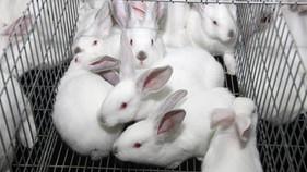 conejos_1.jpg