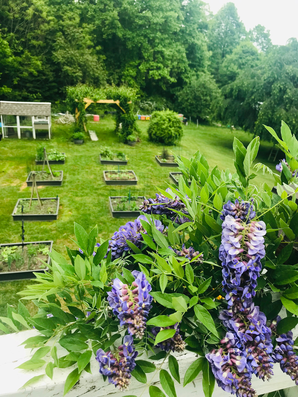 flower herb and vegetable garden with wisteria