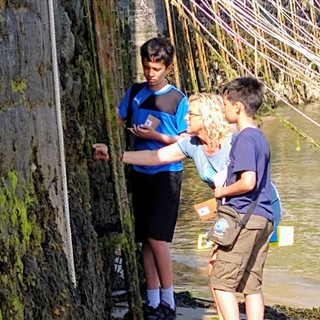 Looking closely at the marine flora and fauna