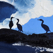 Pembrokeshire Cormorants