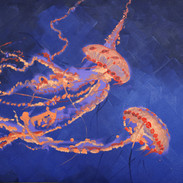 """Fire Down Below"" jellyfish bioluminescence"