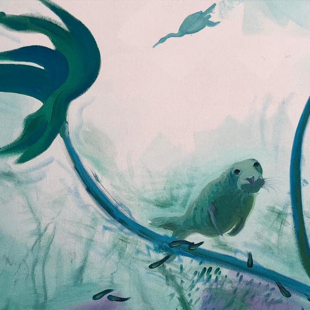 Close up of kelp and Grey seal