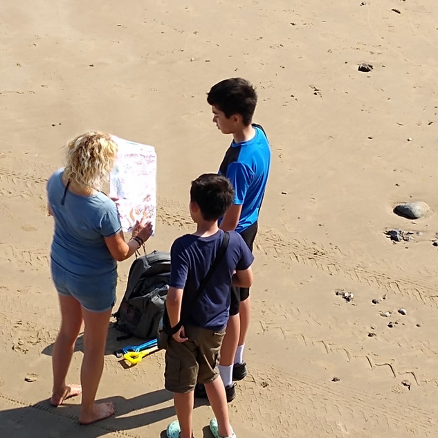 Art-Sci Field trip seaweed reference field guide