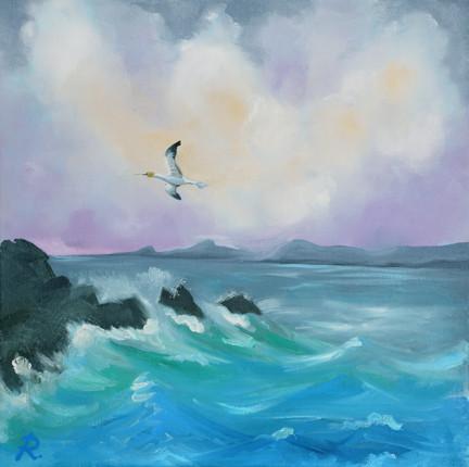 Gannet surveying the sound