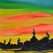 Cormarants and Shags at sunset