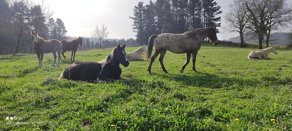 Caballos en la naturaleza disfrutando