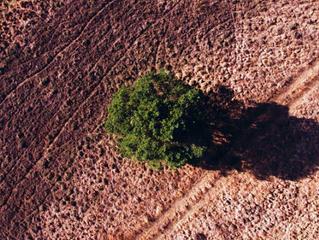 Los cinco motivos que están causando la desaparición de una de cada cuatro especies del planeta
