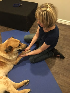 Dr. Teri works with patient, Bear, to assess his overall well-being before providing him with an adjustment.