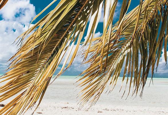 coconut-tree-on-seashore-2004373.jpg