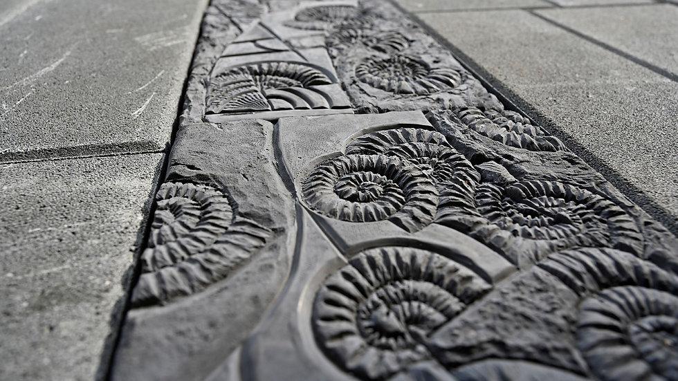 組合磚-菊石