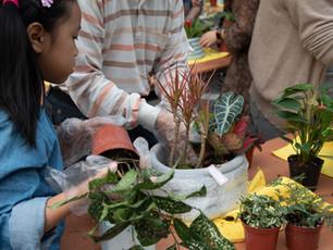 社區組盆活動   花草中的水泥盛會