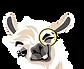 Logo%403x-11_edited.png